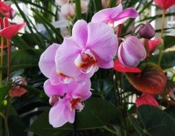 ORCHID 3